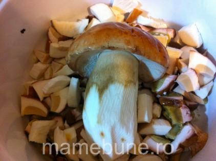 hribi-ciuperci