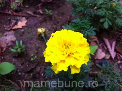 floare_toamna