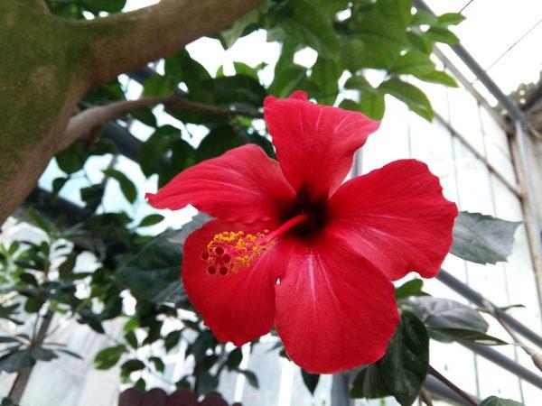 floare gradina jibou