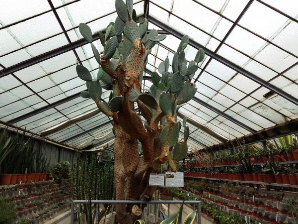 cactus tequila jibou