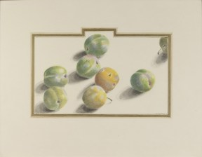 A colored pencil drawing of a group of green and yellow plums