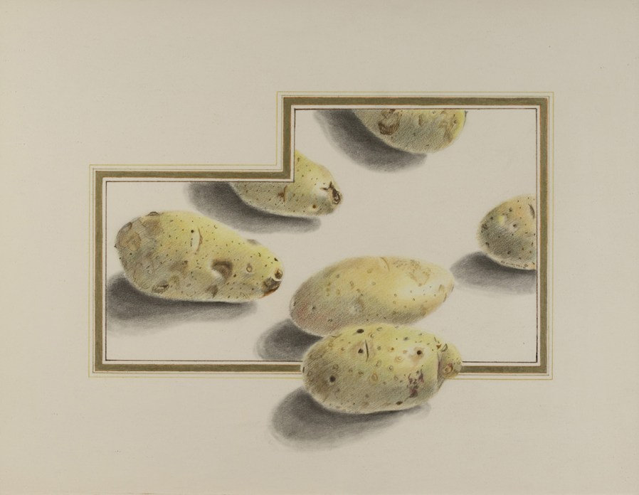 A colored pencil sketch of a group of potatoes