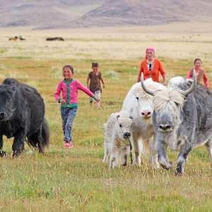 Mongolei Reisebericht – Tipps und Infos für eine individuelle Mongolei Reise