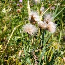 Flores nativas de esta zona de Estados Unidos.