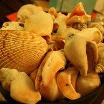 Los caracoles que junté en el mar, antes de ser decorados.