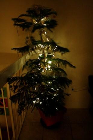 El pino encendido.