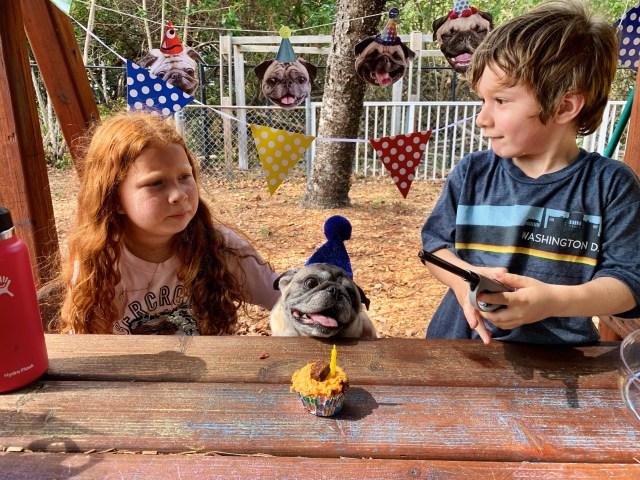 Fiesta de cumpleaños del perro Junior el pug