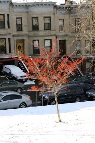 Un poco de color en invierno.