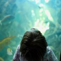 Frost Museum of Science: El museo que Miami merecía