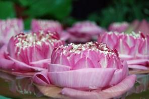 Lotusblüte Yoga im Alltag
