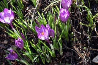 Stille im Frühling