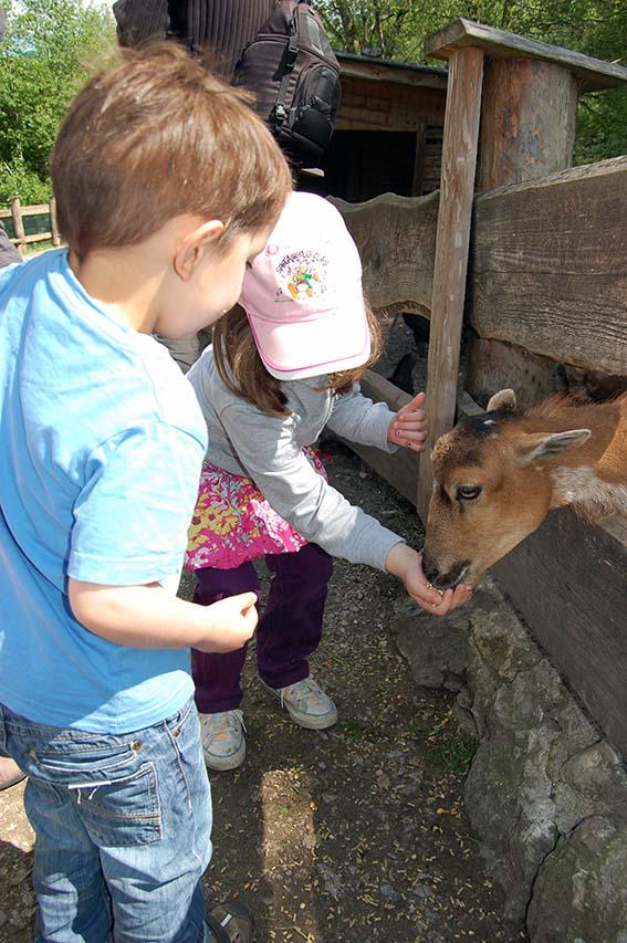 Bei den Ziegen braucht das Füttern etwas mehr Fingerspitzengefühl!