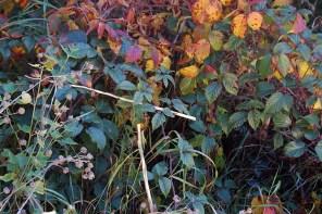 Herbstzeit Me-Time Oktober WMDEDGT