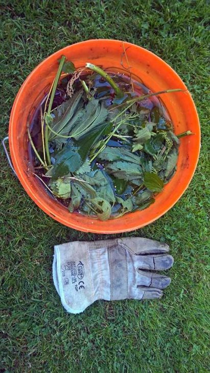 wills du umweltbewusst leben? Brennnesseljauche - Gartendünger selber machen!
