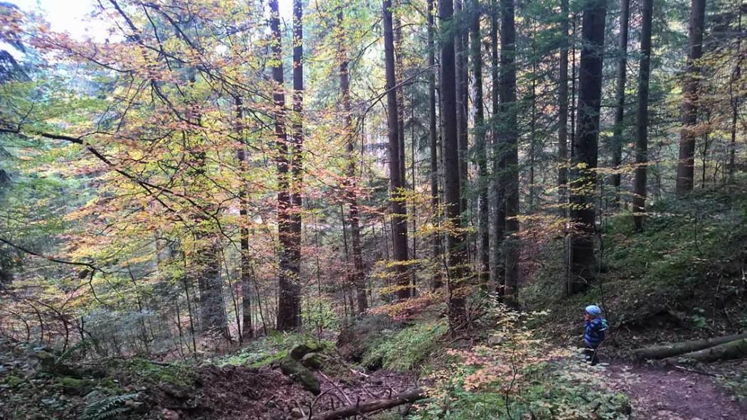 Spielen im Wald: für Naturkinder und alle, die es sein wollen