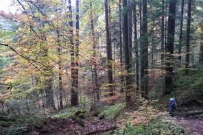 Spielen im Wald und in der Wiese: für Naturkinder und alle, die es sein wollen