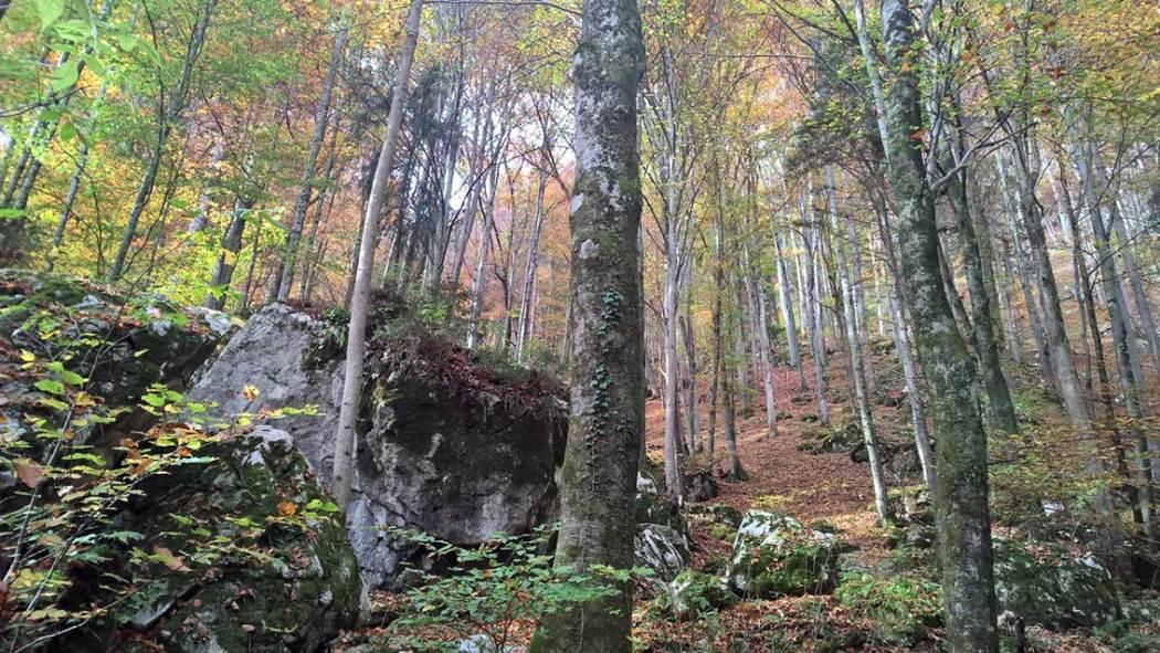 Herbst mit Kindern: Wanderung zum Grafenloch: Achtung Trittsicherheit erforderlich!