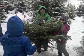 Christbaum selber schlagen: Hol Dir Deinen Tannenbaum aus dem Wald und Weihnachtsgeschenke für Kinder ab acht Jahren