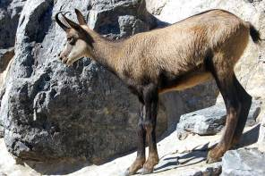 Ausflug in den Alpenzoo – Innsbruck