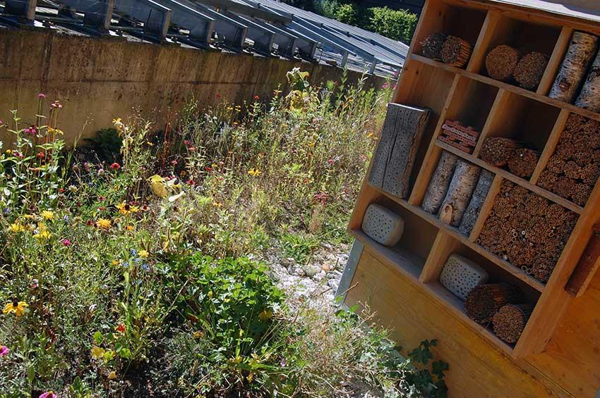 Insektenfreundlicher Garten - sterben die Insekten aus? Das große Bienensterben noch aufhaltbar?