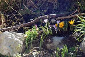 Inspirationen für einen artgerechten Garten! Frühlingsfarben!