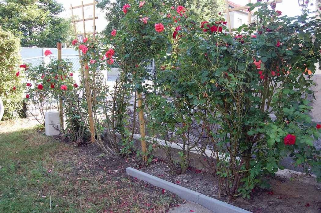 Mehr analoge Zeit im Garten verbringen! TUT GUT