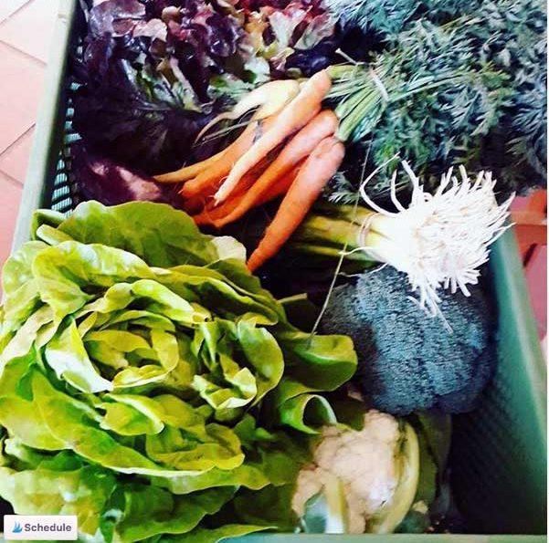 Kochen zuhause mit der Gemüsekiste