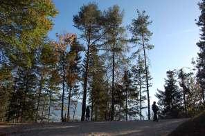Waldbaden – wie der Wald die Menschen heilt