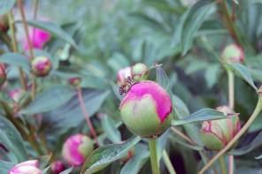 Gartenarbeiten im Mai: Mein Garten erdet mich