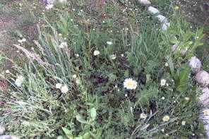 Garten für Insekten und Vögel als Trittstein