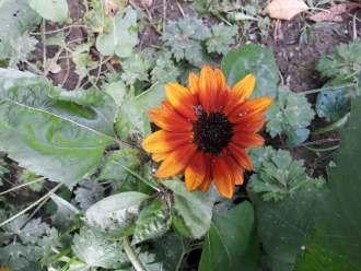 Meine Gartenernte im Juli
