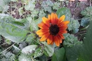 Gartenernte im Juli: naschen, pflegen, freuen