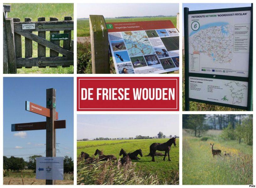 Friese wouden