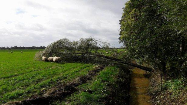 Er ligt een boom om, oktober storm