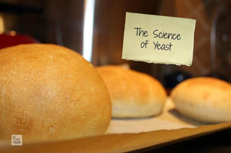 Science-of-Yeast-Experiment