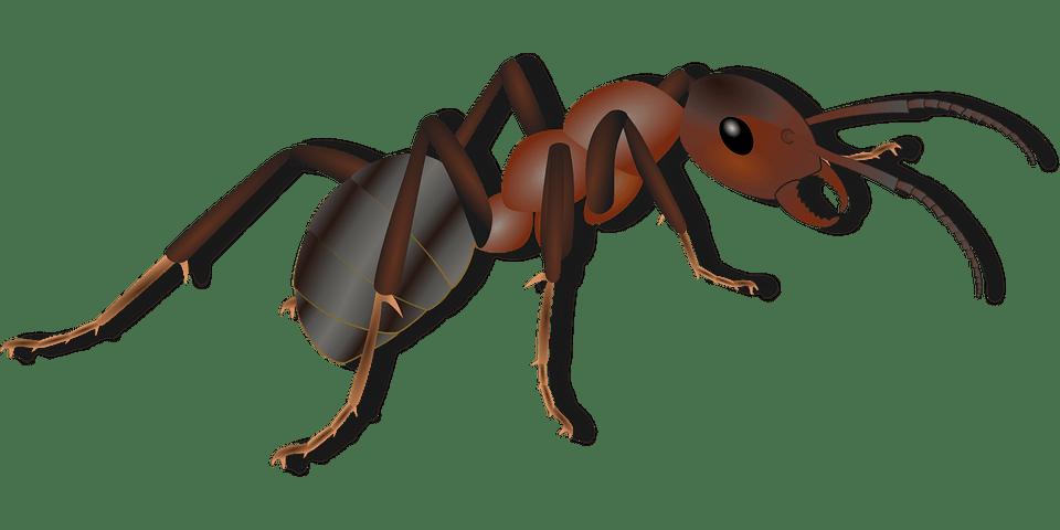 كيف تقضي على حشرات المنزل