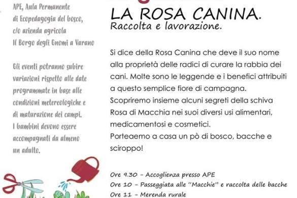 La-Rosa-Canina-Il-Borgo-degli-Gnomi-Varano-Teramo