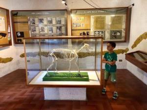 Museo-del-lupo-civitella-alfedena-laquila