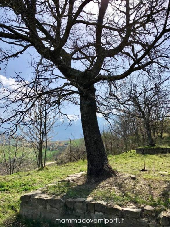 Agriturismo-Colle-Sette-Vangeli-Arsita-TE-16