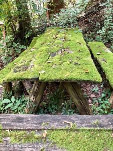 Area in prossimità dello stagno presso la Riserva Naturale Castel Cerreto