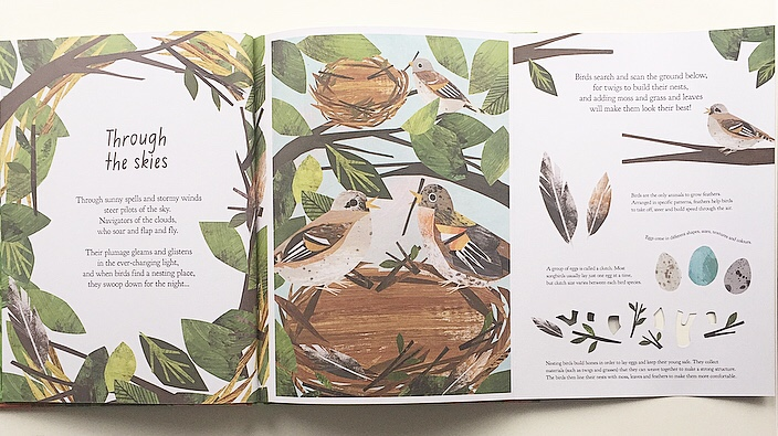 Fold out page from A Walk through nature sharing information about birds.