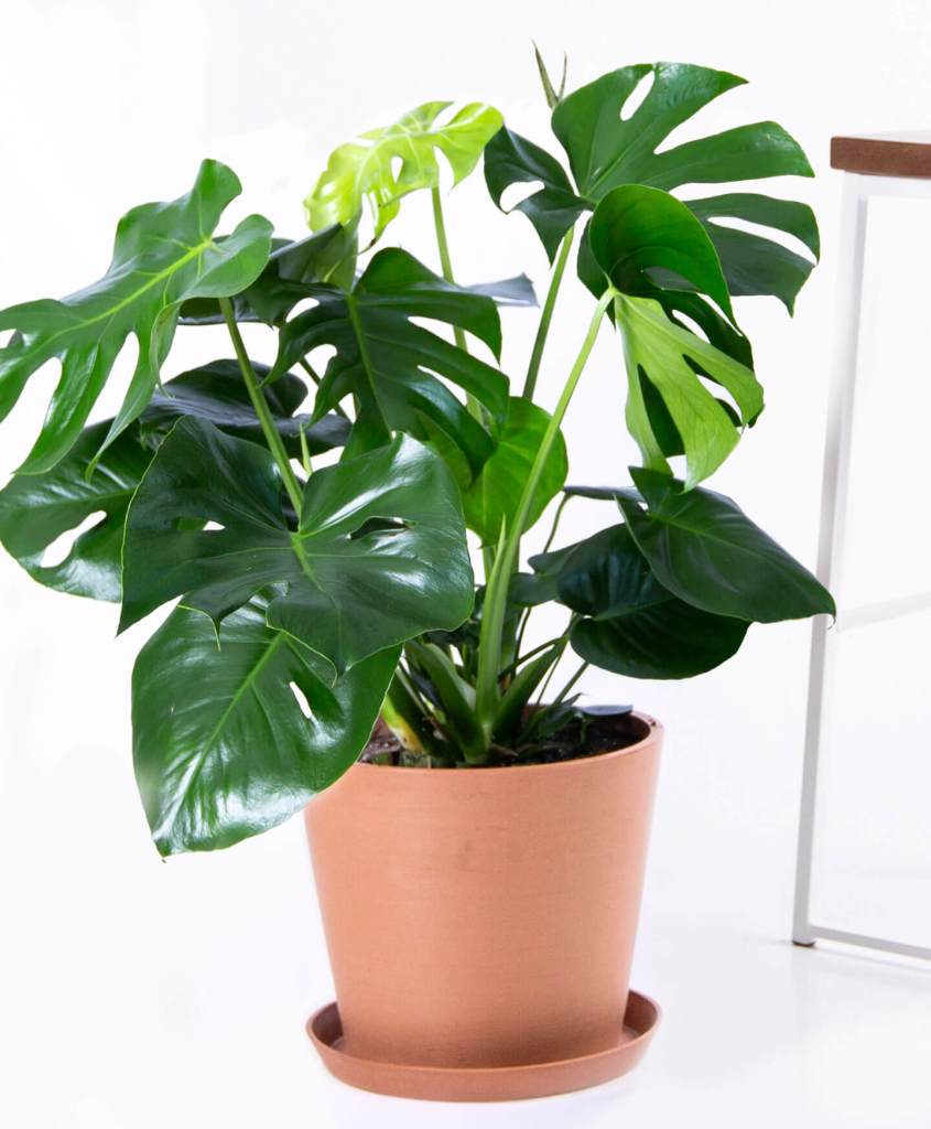 best plants for your Airbnb