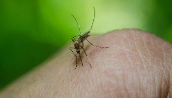 rimedi naturale contro le zanzare