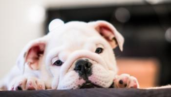 curare animali con farmaci umani
