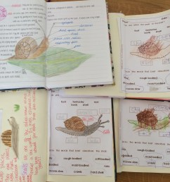 for our nature journals we sketched a picture from an image on the computer in the absence of a real model we looked at a snail s anatomy their habitat  [ 3264 x 2448 Pixel ]