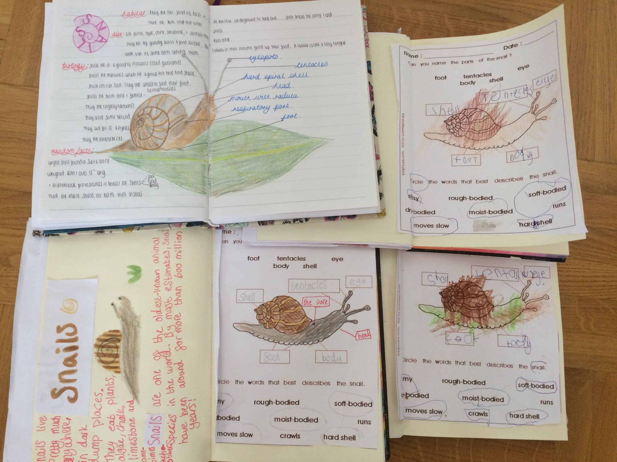 hight resolution of for our nature journals we sketched a picture from an image on the computer in the absence of a real model we looked at a snail s anatomy their habitat