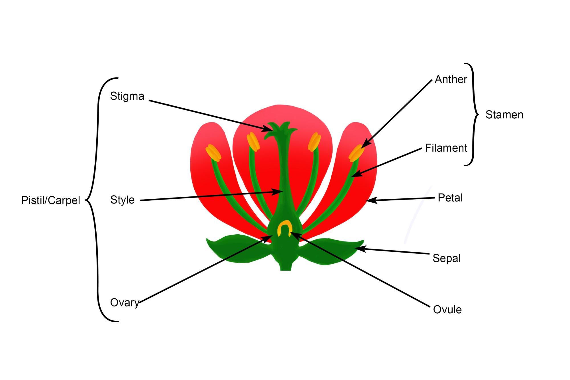 hight resolution of annotated structure diagram of a flower the seed bearing feature of a plant