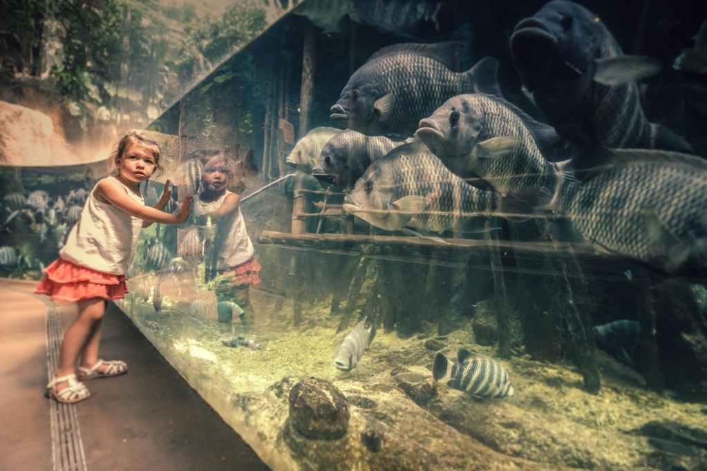 La sortie au zoo: premier bain de foule