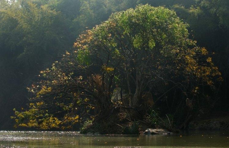 Trip to  Ranganathittu Bird Sanctuary