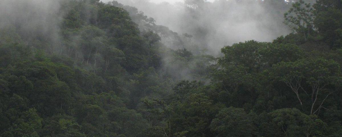 Une maman disparue en forêt survie grâce à son lait maternel
